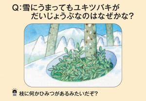 雪にうまってもユキツバキがだいじょうぶなのはなぜかな?