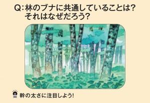 林のブナに共通していることは?それはなぜだろう?