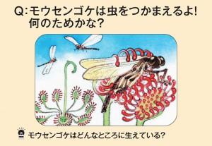 モウセンゴケは虫をつかまえるよ!何のためかな?