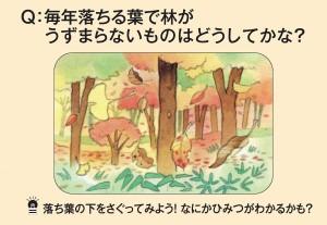 毎年落ちる葉で林がうずまらないものはどうしてかな?