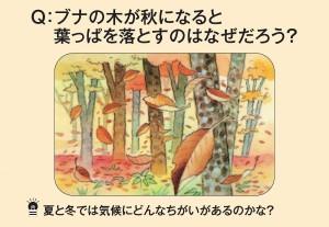 ブナの木が秋になると葉っぱを落とすのはなぜだろう?