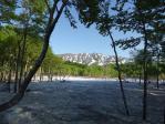 樹間から望む浅草岳